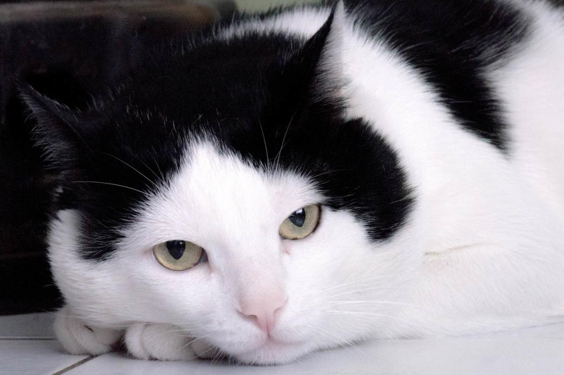Kedim
