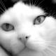 Benim Kedi