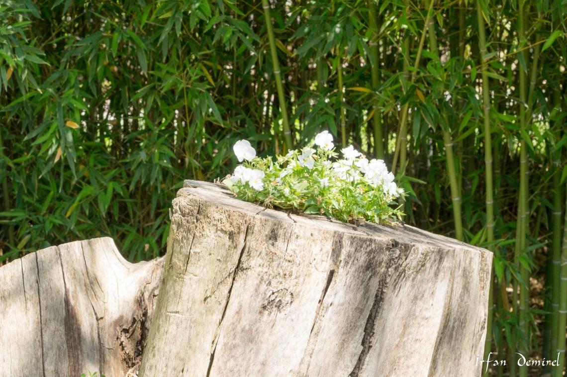 Ağaçta Çiçek